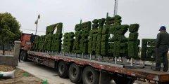 上海赵巷五色草植物绿雕项目